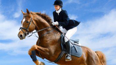Photo of اسب سواری